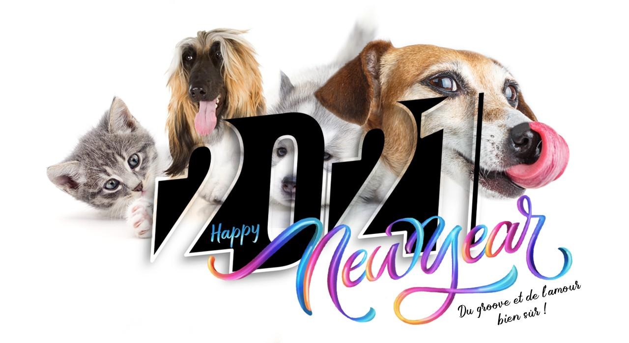 Bonne année 2021 de toute l'équipe groovy d'Animania !